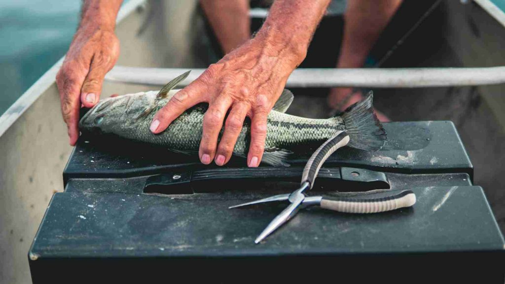 Best Fishing Pliers 2021: Reviews & Buyer's Guide