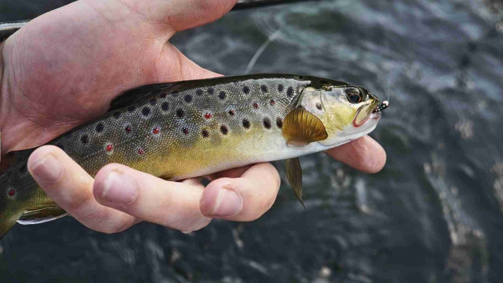 Best Fishing Lines For Trout 2021: Reviews & Buyer's Guide